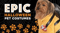 Epic Pet Costumes | Wholesale Halloween Costumes Blog