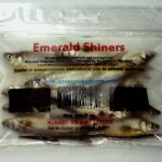 Preserved Emerald Shiners