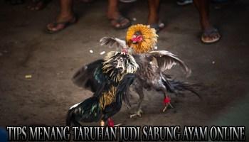 Tips Menang Taruhan Judi Sabung Ayam Online