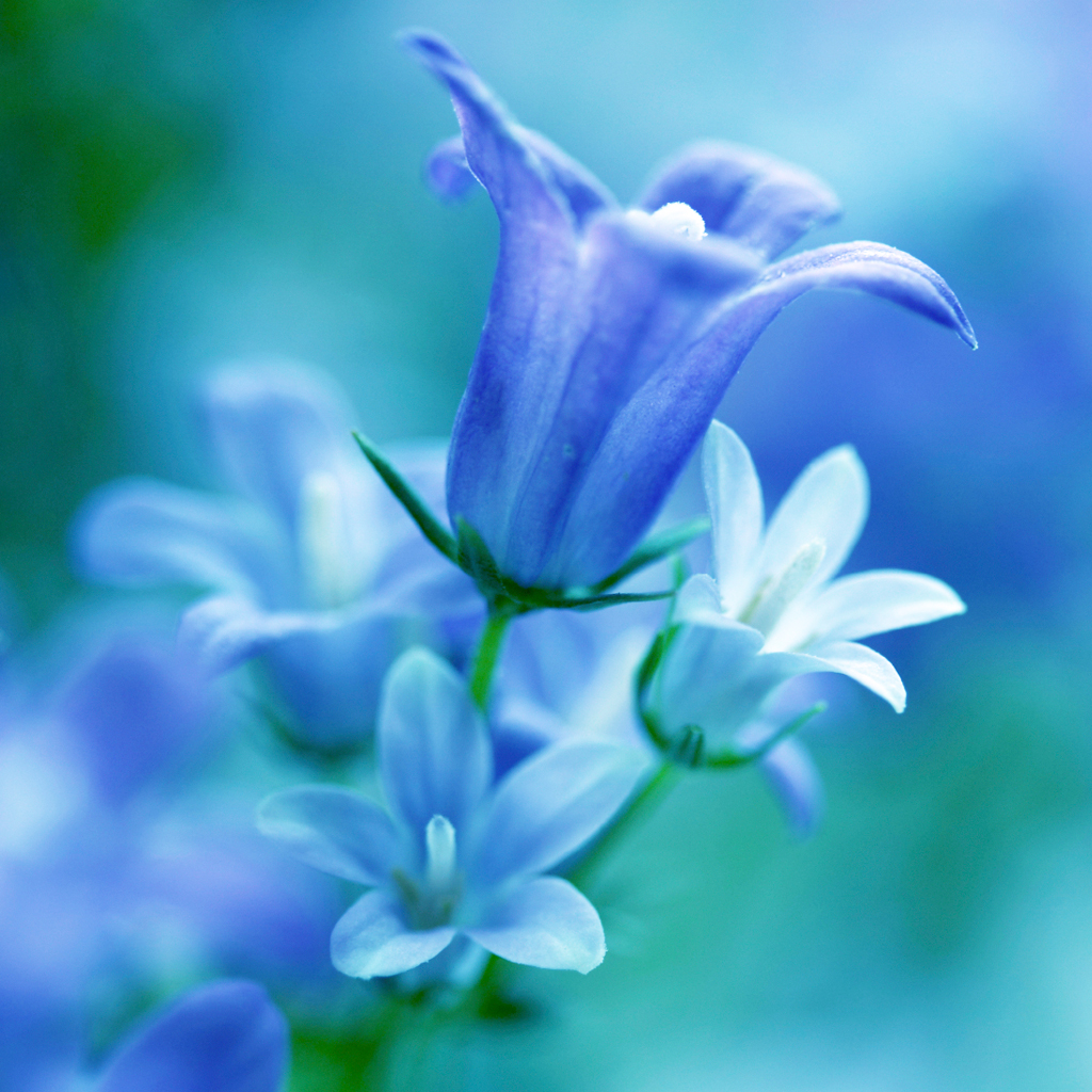 Crafters Choice Waterlily  Bluebell Fragrance Oil 84