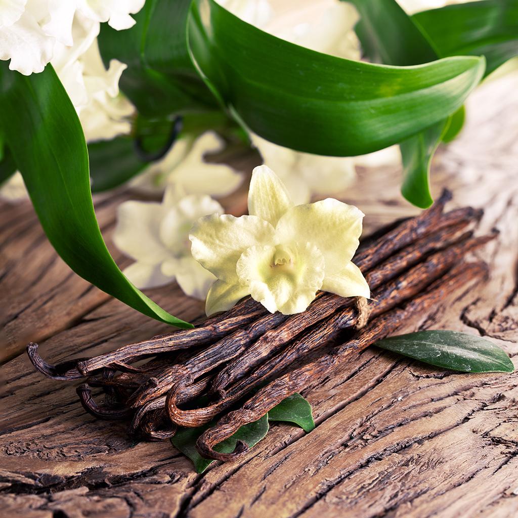 Crafters Choice Sandalwood Vanilla Fragrance Oil 214