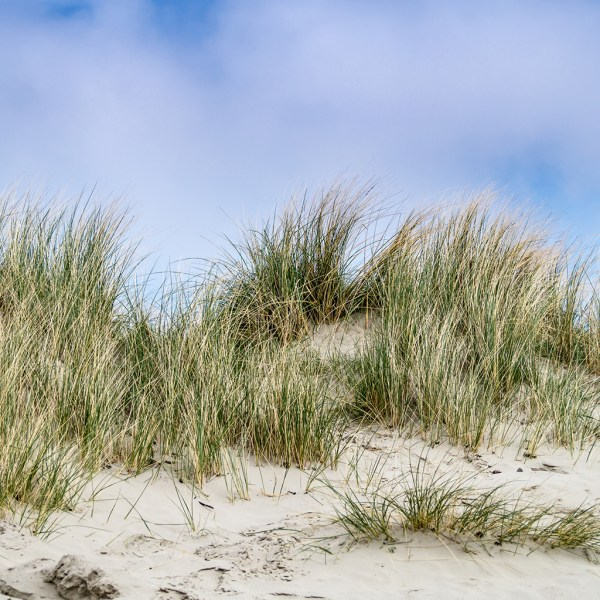 Crafters Choice Dune Grass Fragrance Oil 146