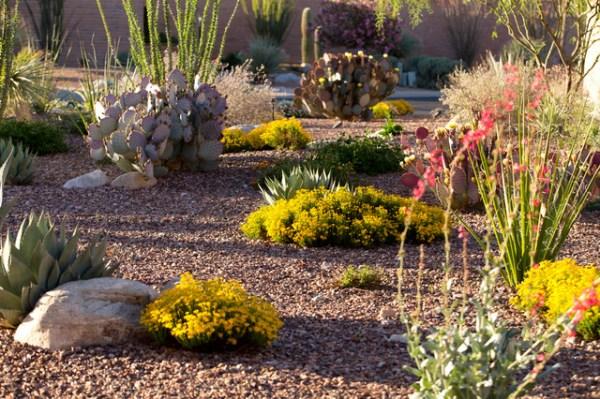 desert landscaping bring desert-feel