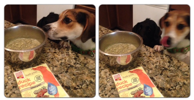 Honest Kitchen Dog Food Review  Wow Blog