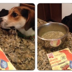 The Honest Kitchen Ikea Island Dog Food Review Who Said Nothing In Life Is Free Milo Sniff