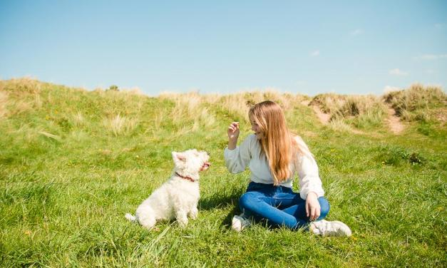 Tips for Keeping Dogs Healthy in Summer