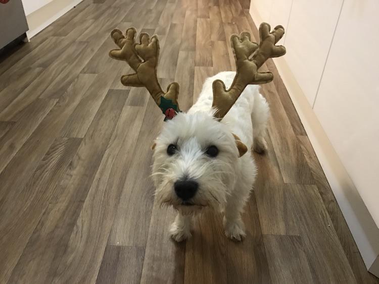 teddy christmas antlers