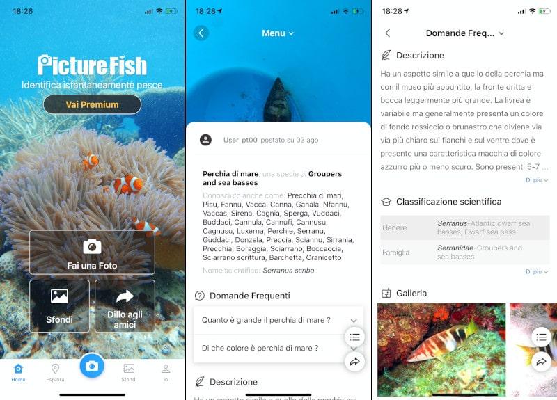 come riconoscere i pesci con una foto del cellulare