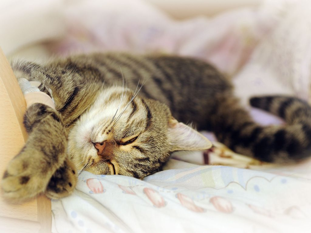 Image Result For How To Get Rid Of Cat Urine Smell On Carpet
