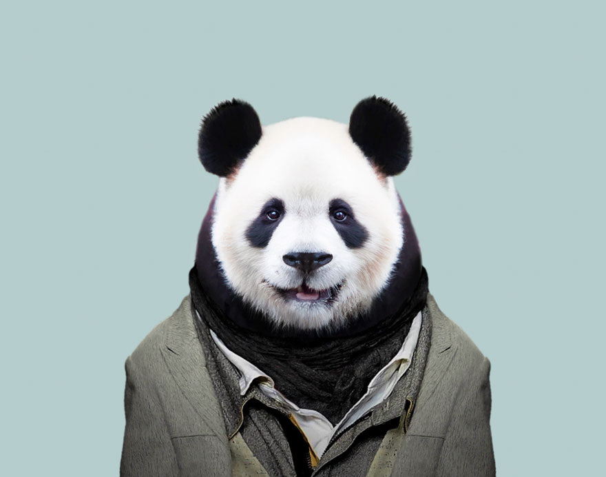 Cute Images of Animals Dressed as Humans  WhyKol