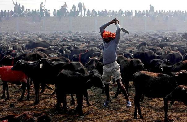 Photo © Gemunu Amarasinghe/AP/Courtesy WSJ