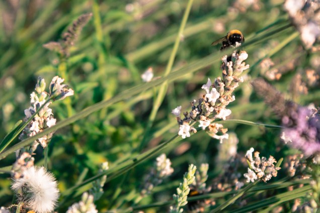 Grass and beez