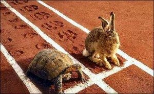 Choose to be the tortoise, not the hare