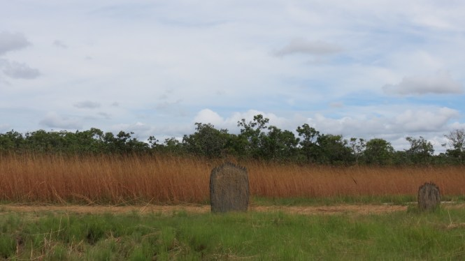 Litchfield Termite Mounds