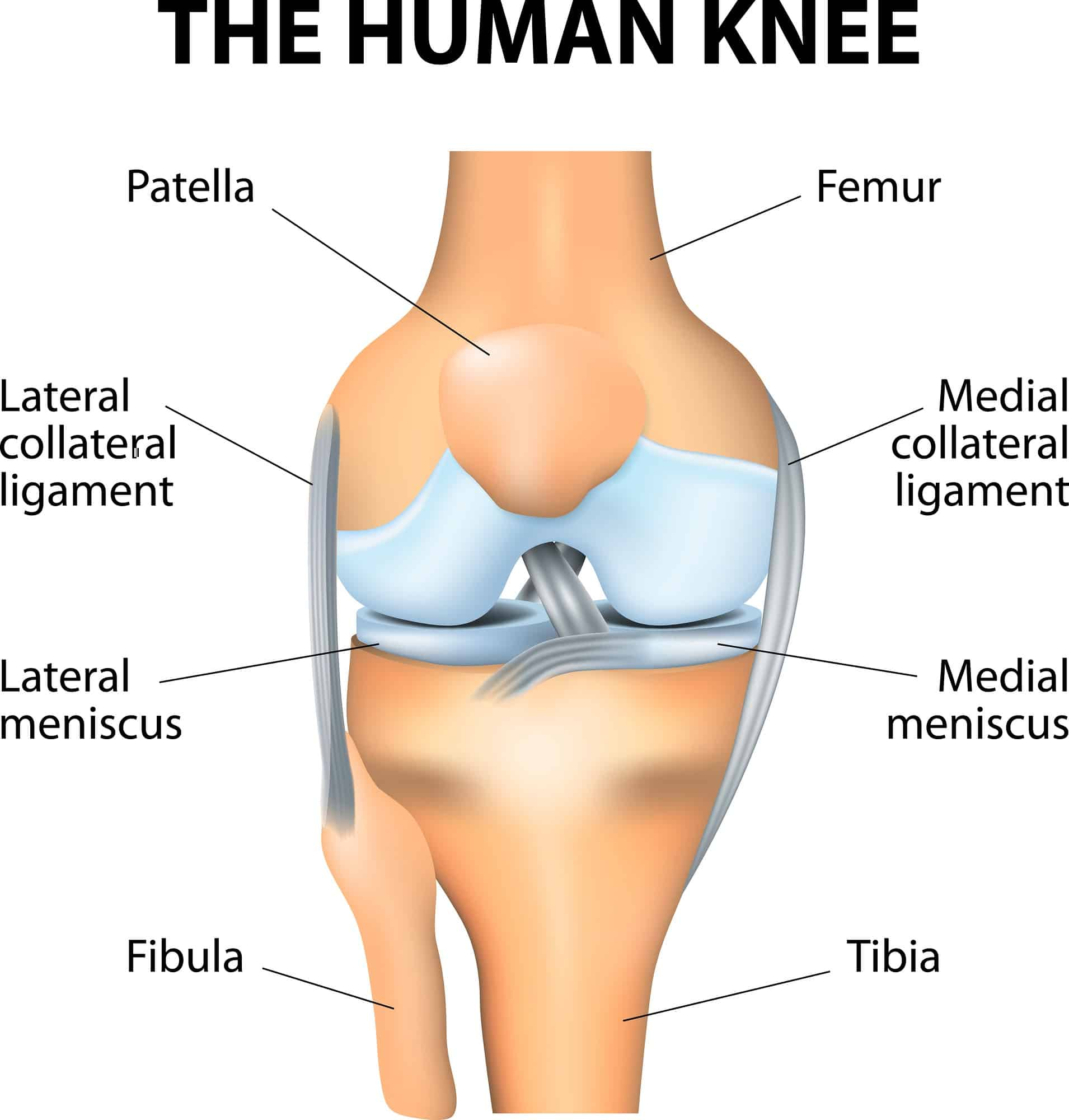 diagram of the knee and ligaments wiring photocell mikaela shiffrin out for season wisconsin skier
