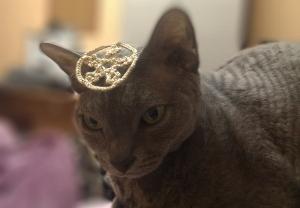 Wiccan Cat