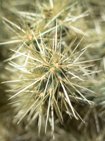 Obligatory Cactus Shot