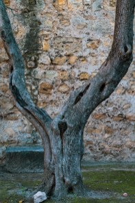 A tree grows in the castle grounds.