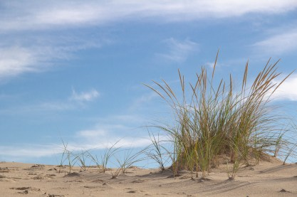 More Dune, Less Grass