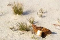 Mushroom in the Sand