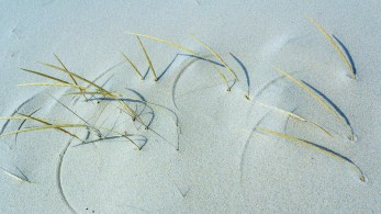 Crop Circles on the Dune
