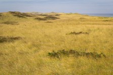 Dune Grass Forever