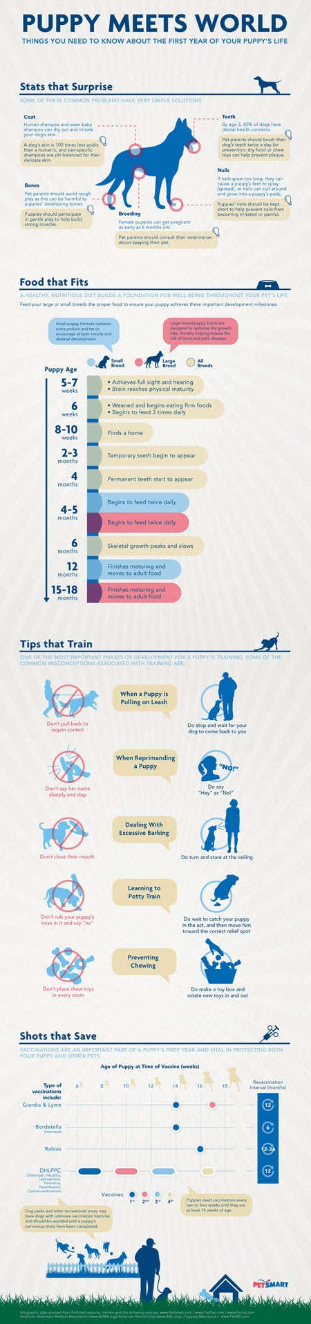 Puppy Infographic