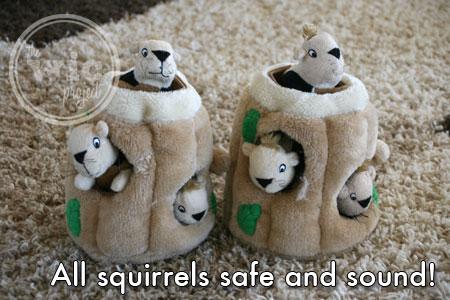 Hide A Squirrel