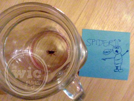 Spider!! Eeek!
