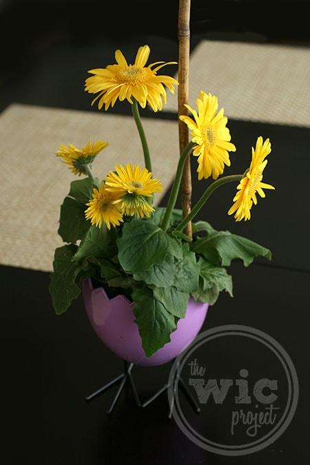 FTD Chicks Charm Springtime Gerbera Daisy Plant