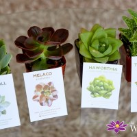 Succulents Box Review: Is It Worth It? Succulent & Cactus Monthly Subscription Box + Giveaway