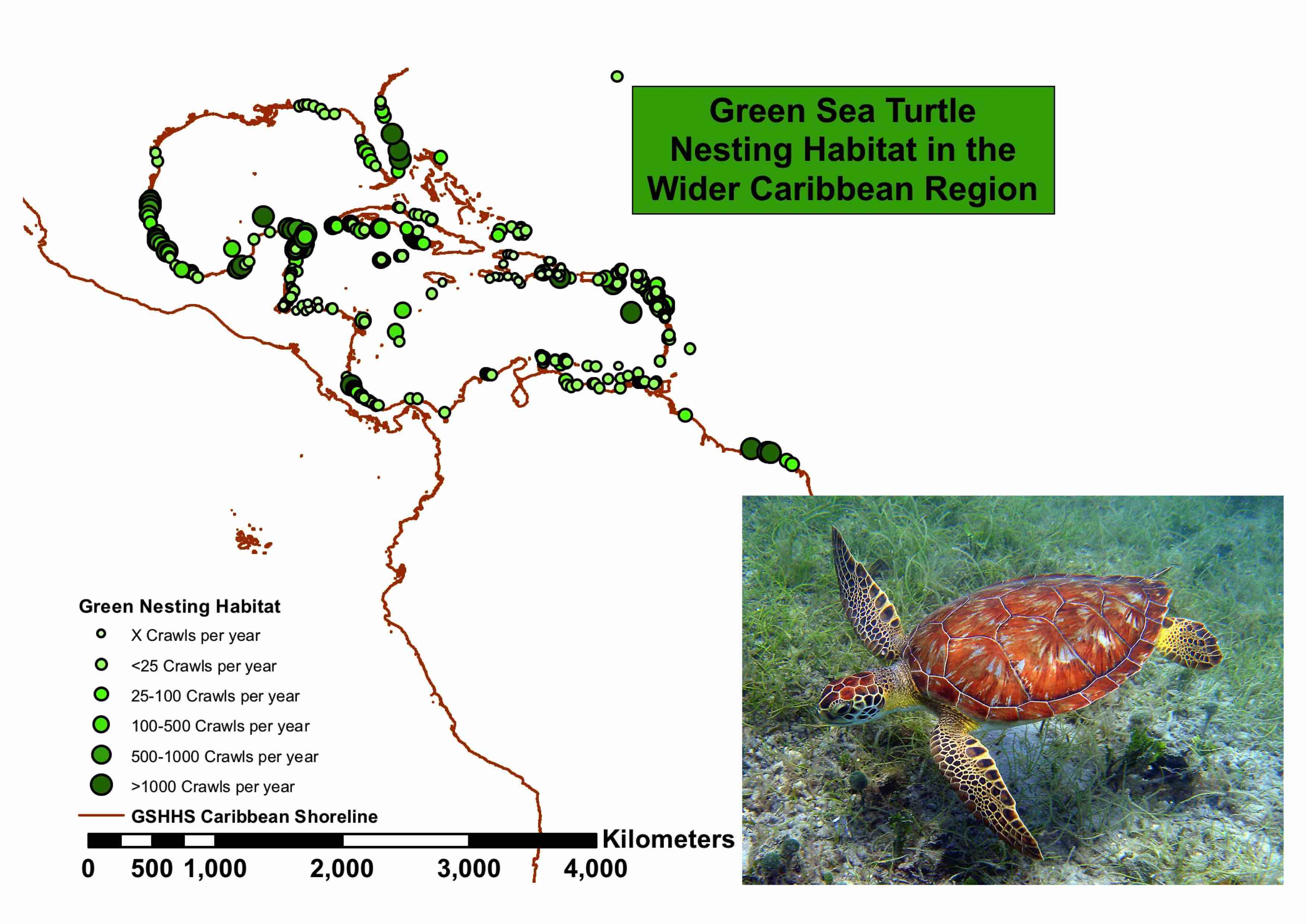 Green Turtle Population Trends