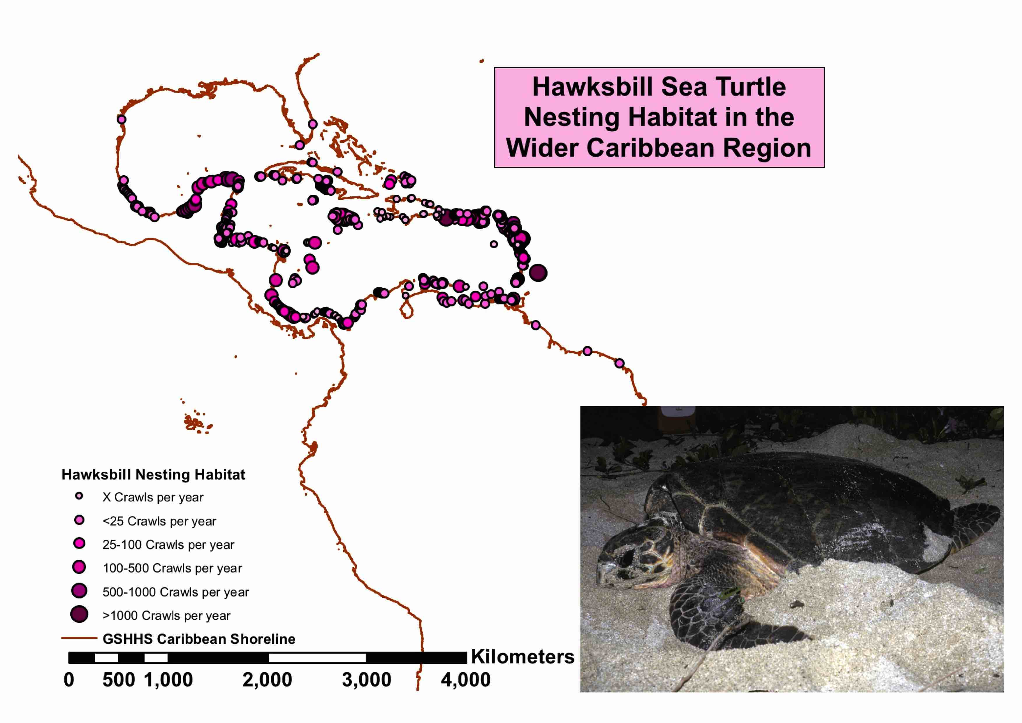 Hawksbill Turtle Population Trends