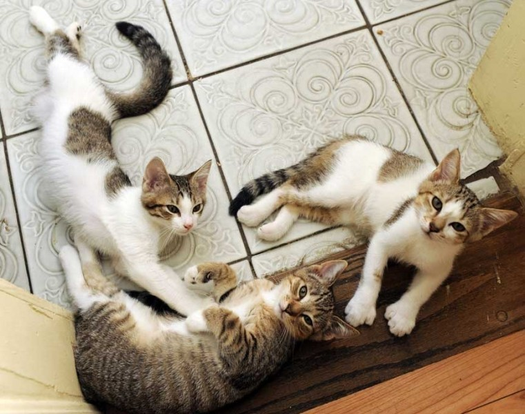 cats laying on floor