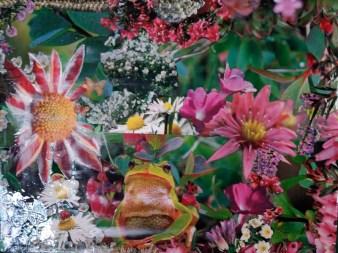 frosch im blumenrausch collage