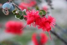 kalbarri coast und wildflower park (1)