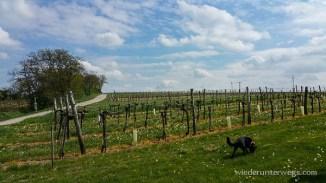 Wonneviertel Weinviertel Mai 2015 (24 von 39)