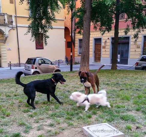 Bologna Juni 2015 (25 von 25)