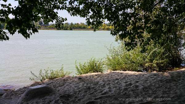 Donauinsel Hundebaden August 2015 (11 von 11)