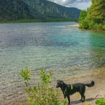 Einmal Almtal und zurück – Wandern mit Hund