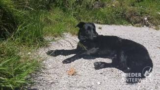 Altausseer See Hund_web (31 von 44)