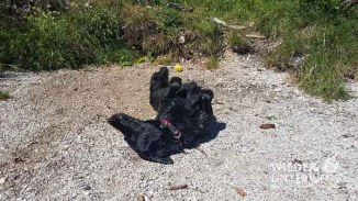 Altausseer See Hund_web (35 von 44)