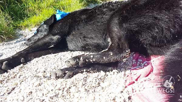 Altausseer See Hund_web (38 von 44)