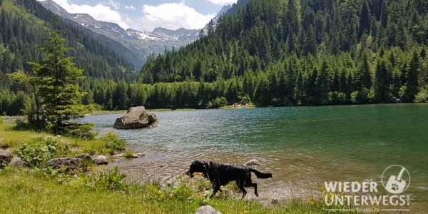 Tipps Baden mit Hund
