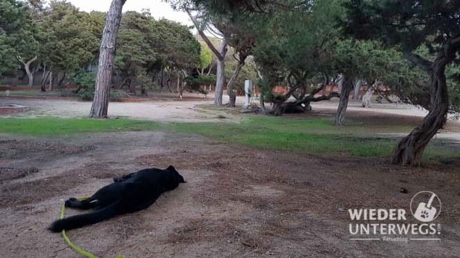 Camping Hund viel Platz in Sardinien