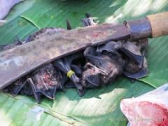 Fledermäuschen