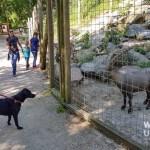 Top Ausflug: Mit Hund im Tierpark Haag