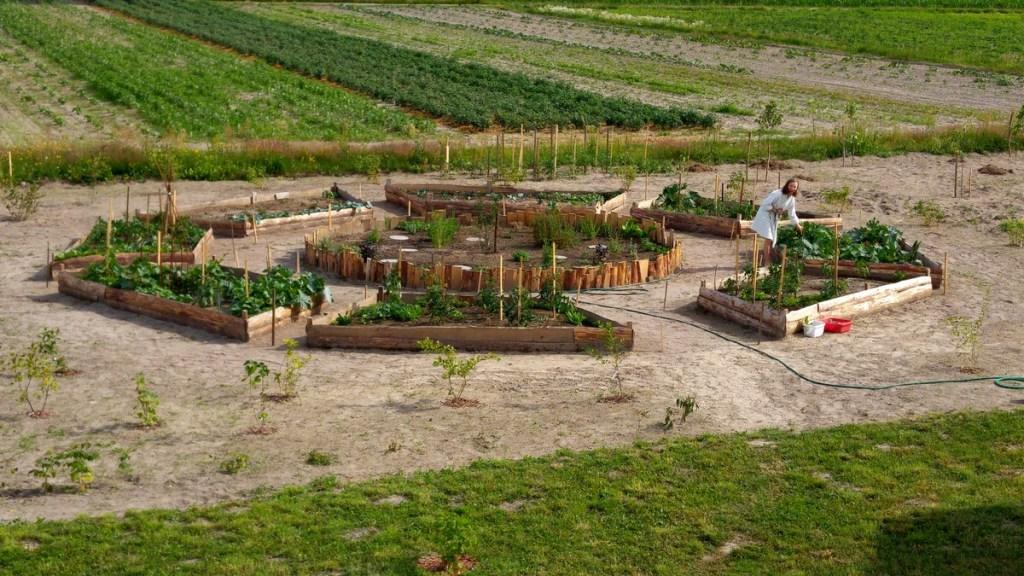 skrzynie ogrodowe na warzywa, maja w ogrodzie, zielone pogotowie, ogrodowe pogotowie, ogrodomaniacy, ogród