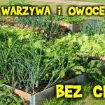 Warzywa i owoce bez chemii eko bio organic organiczne bez nawozów