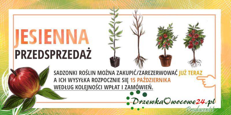 drzewka i krzewy owocowe sklep online - Jak sadzić drzewka owocowe